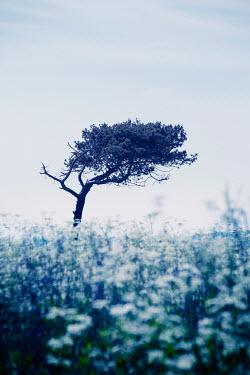Carmen Spitznagel WEATHERED TREE IN MEADOW OF FLOWERS