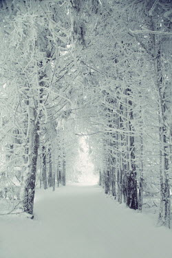 Carmen Spitznagel EMPTY AVENUE OF TREES WITH SNOW
