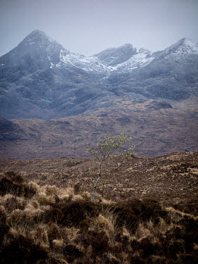 David Baker TREE IN MOORLAND WITH SNOWY MOUNTAINS