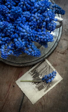 Jaroslaw Blaminsky BLUE FLOWERS WITH OLD PHOTO ON TABLE