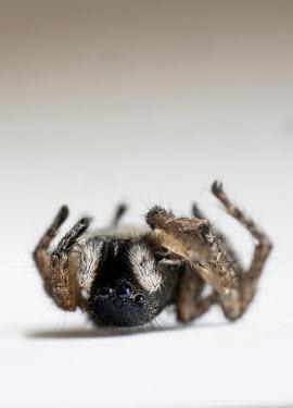 Jaroslaw Blaminsky DEAD SPIDER LYING ON BACK