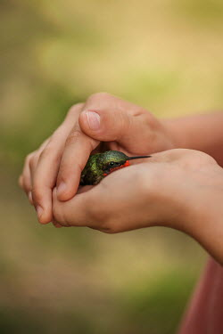 Buffy Cooper CHILD HOLDING TINY BIRD IN HANDS