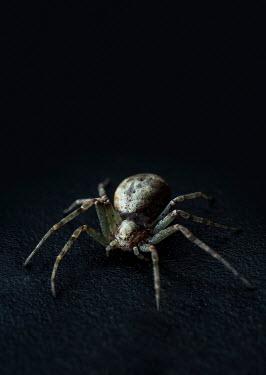 Jaroslaw Blaminsky CLOSE UP OF SPIDER IN SHADOW