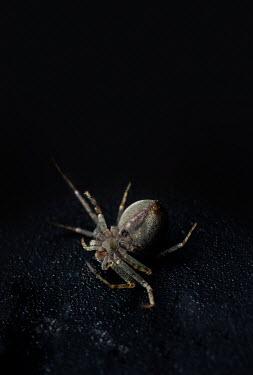 Jaroslaw Blaminsky CLOSE UP OF DEAD SPIDER IN SHADOW