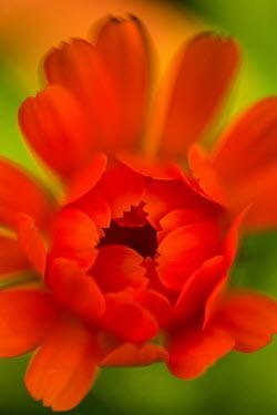 Sally Mundy CLOSE UP OF ORANGE FLOWER