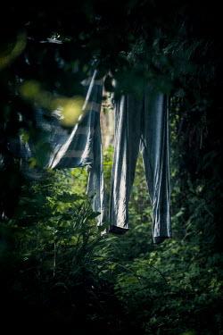 Sally Mundy WASHING HANGING BY TREE IN GARDEN