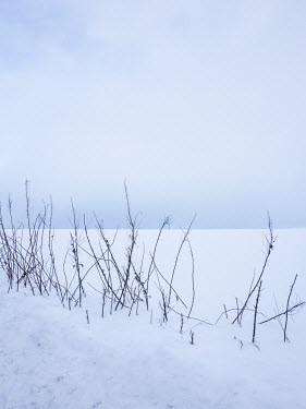 David Baker SNOWY FIELD WITH GRASS AND SKY