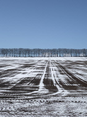 David Baker LINE OF TREES WITH SNOWY FIELD