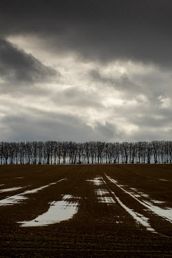 David Baker LINE OF TREES WITH STORMY SKY