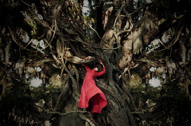 Heather Evans Smith WOMAN IN RED ON TREE WITH CREEPER