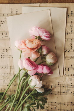 Isabelle Lafrance BUNCH OF FLOWERS LYING ON MUSICAL MANUSCRIPT