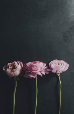 Isabelle Lafrance THREE PINK FLOWERS