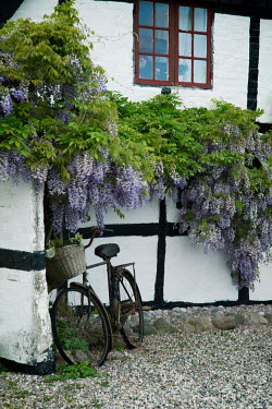 Carmen Spitznagel EXTERIOR OF TUDOR HOUSE WITH BICYCLE AND WISTERIA