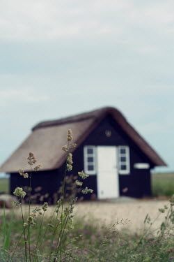 Carmen Spitznagel SMALL CABIN IN FIELD WITH GRASS
