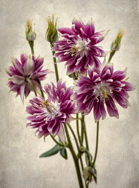 Jaroslaw Blaminsky BUNCH OF PINK FLOWERS