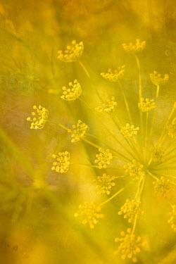 Liz Dalziel WHITE FLOWER IN GOLDEN SUNLIGHT