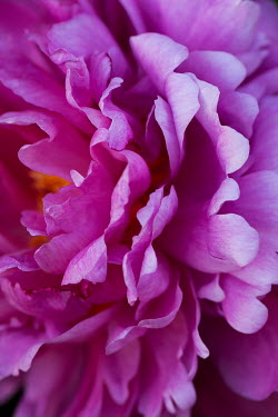 Liz Dalziel CLOSE UP OF PINK FLOWER