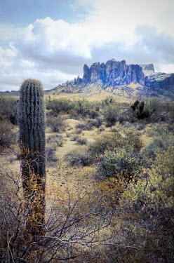 Jill Battaglia DESERT WITH PLANTS AND ROCKY MOUNTAINS