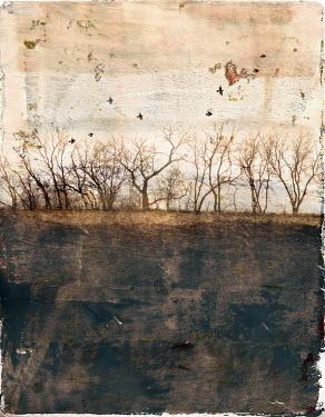 Jill Battaglia FIELD WITH TREES IN WINTER