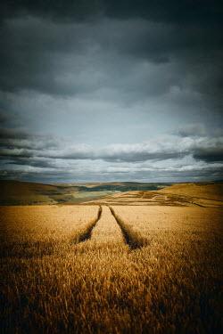 Magdalena Russocka tractor wheel marks in wheat field