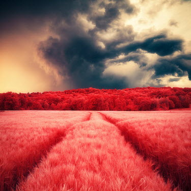 David Keochkerian RED FIELD AND FOREST WITH STORMY SKY