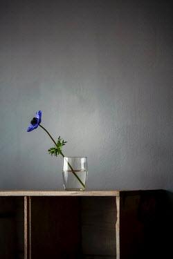 Sally Mundy BLU FLOWER IN GLASS ON SHELF