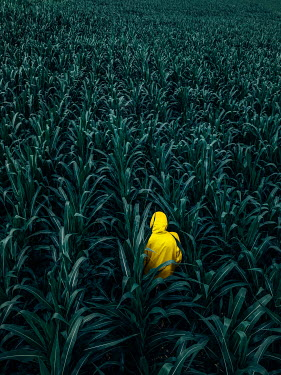 Magdalena Russocka hooded man in corn field from above