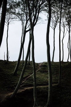 Natasza Fiedotjew view of bare trees on mossy hill