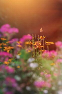 Lisa Bonowicz SMALL BUTTERFLY BY FLOWERS IN SUNLIT GARDEN
