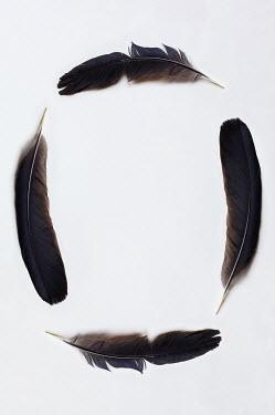 Stephanie Frey CIRCLE OF BLACK FEATHERS