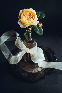 Isabelle Lafrance YELLOW ROSE ON SILVER DISH WITH WHITE RIBBON