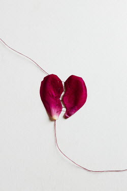 Isabelle Lafrance PINK PETAL SEWN TOGETHER WITH THREAD