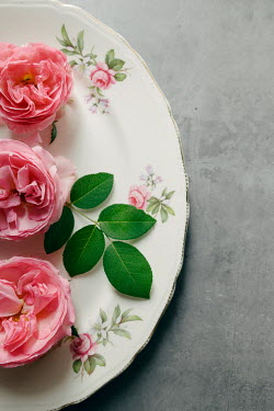 Isabelle Lafrance PINK FLOWERS ON FLORAL PLATE