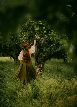 Rebecca Stice WOMAN WITH RED HAIR PICKING APPLE FROM TREE