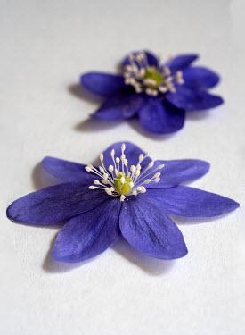 Jaroslaw Blaminsky HEADS OF PURPLE FLOWERS