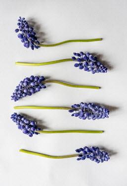 Jaroslaw Blaminsky BLUE FLOWERS AND STEMS