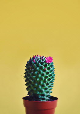 Lyn Randle CACTUS WITH PINK FLOWERS