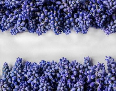 Jaroslaw Blaminsky ROWS OF BLUE FLOWERS