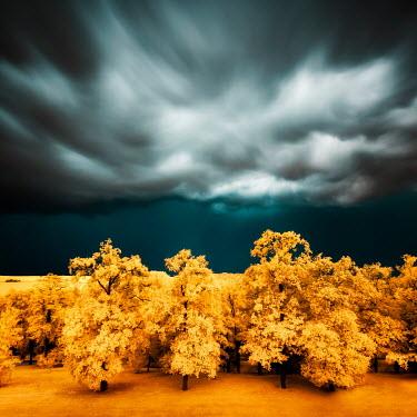 David Keochkerian GOLDEN TREES WITH STORMY SKY