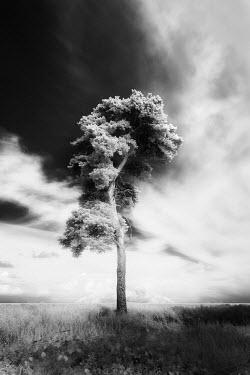 David Keochkerian TREE IN LANDSCAPE WITH STORMY SKY