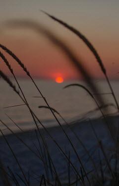 Svitozar Bilorusov GRASS BY BEACH AT SUNSET