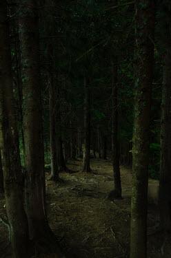Svitozar Bilorusov FOREST WITH TREE TRUNKS IN SHADOW