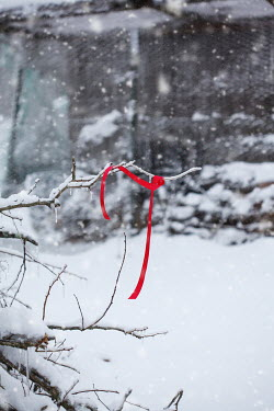 Stephanie Frey RED RIBBON HANGING ON BRANCH IN SNOW