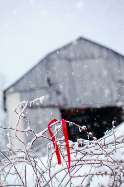 Stephanie Frey RED RIBBON ON BRANCH IN SNOW BY WAREHOUSE