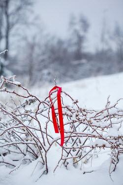 Stephanie Frey RED RIBBON ON BRANCH IN SNOWY COUNTRYSIDE