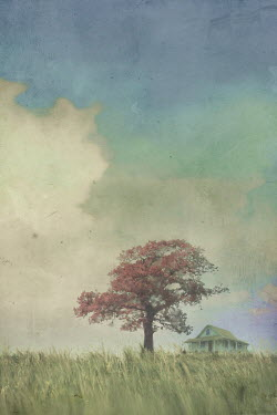 Mark Owen HOUSE IN COUNTRYSIDE WITH TREE AND BLUE SKY