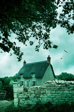 Stephen Mulcahey THATCHED COTTAGE WITH TREE AND STONE WALL