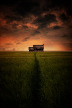 Nic Skerten THATCHED COTTAGE IN FIELD AT SUNSET