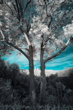 David Keochkerian TREES IN COUNTRYSIDE WITH DISTANT BUILDING