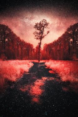 David Keochkerian PATHWAY WITH TREES AND STARRY SKY
